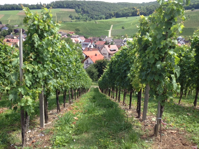 From the Vineyards to the Village of Pfaffenweiler